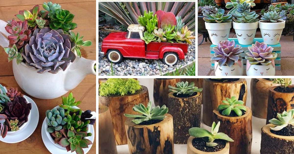 Succulents in Decoration