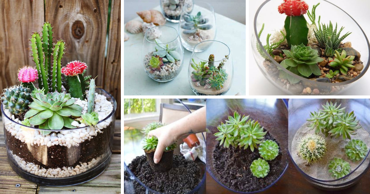 Terrarium for Plants Step by Step
