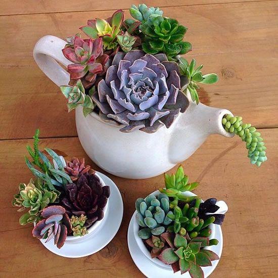 best succulent decor images 2