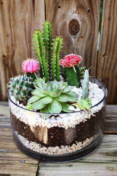 best succulent decor images 5