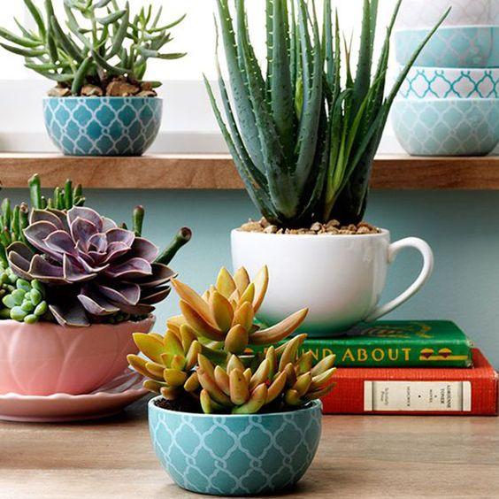 best succulent decor images 7