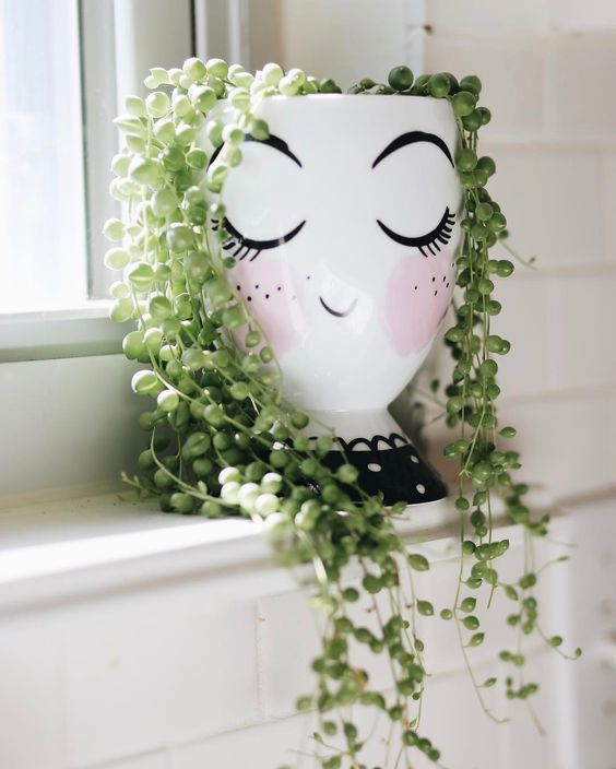 creative decoration succulents 1