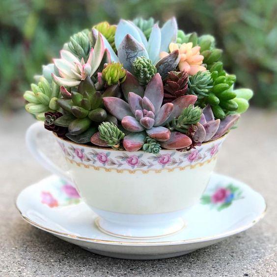 creative decoration succulents 4