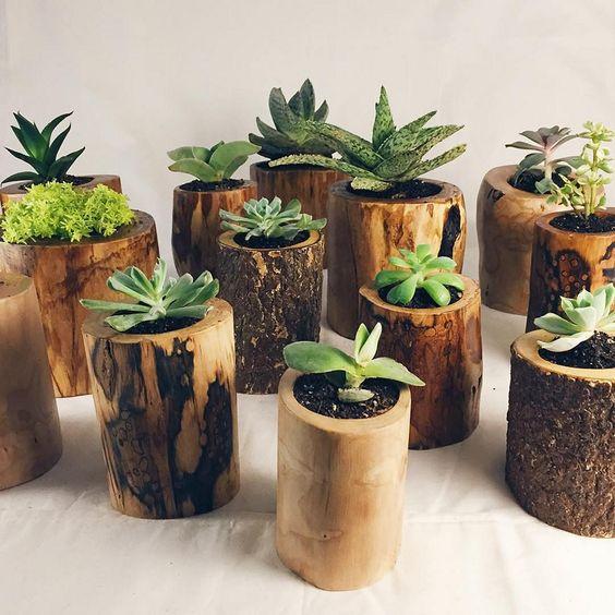 creative decoration succulents 5