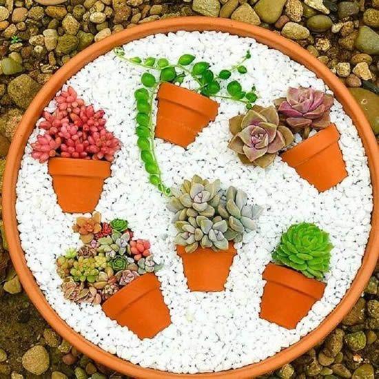 creative decoration succulents 8