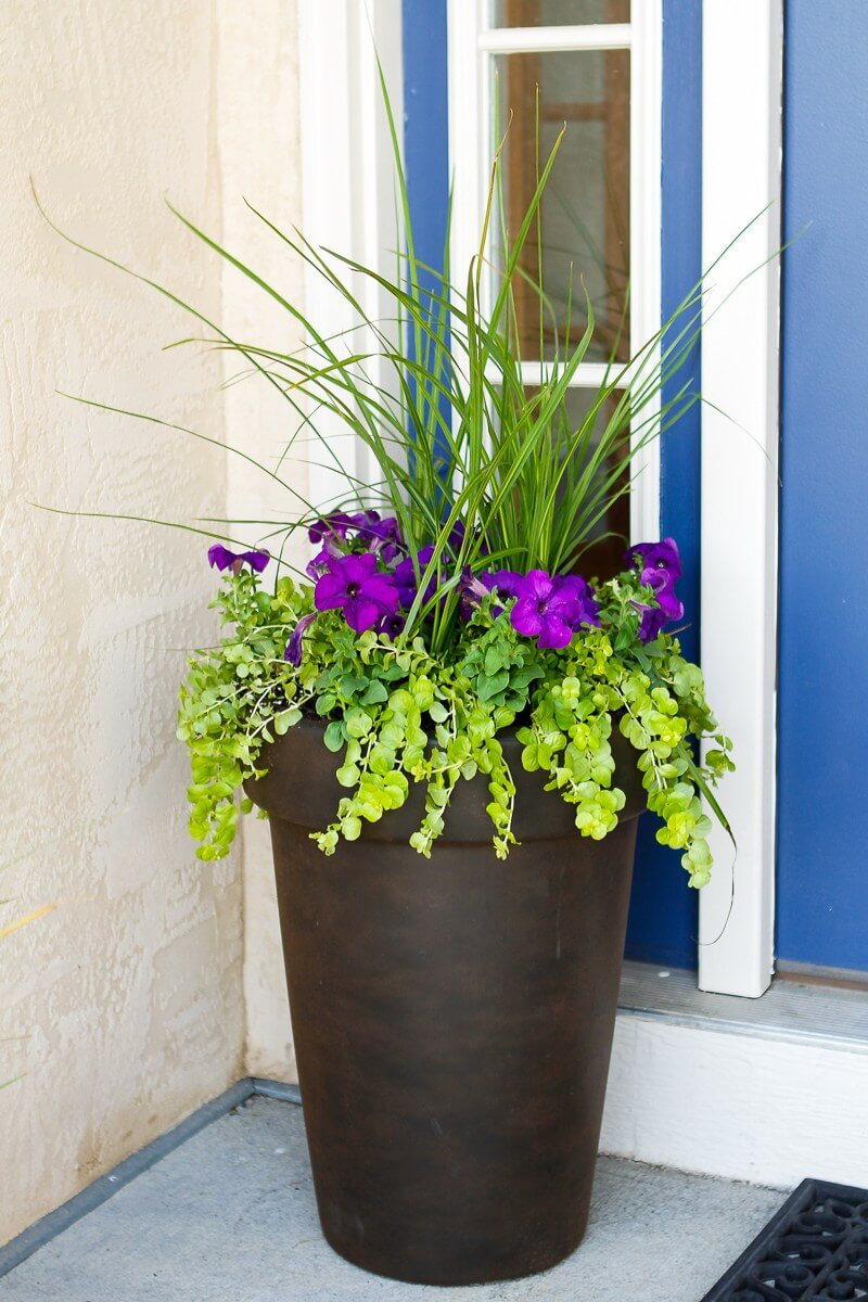decorating front door with plants flowers 10
