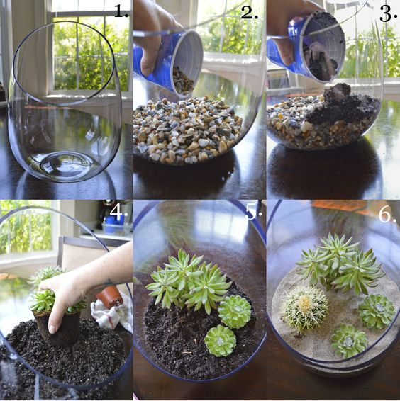 terrarium plants step step 2