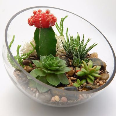 terrarium plants step step